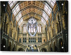 Natural History Museum London Acrylic Print