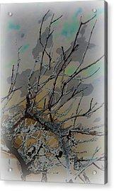 Natural Inversion - 2 Acrylic Print by Amanda Vouglas