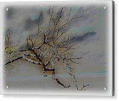 Natural Inversion -1 Acrylic Print by Amanda Vouglas