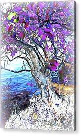Natural Inversion 6 Acrylic Print by Amanda Vouglas