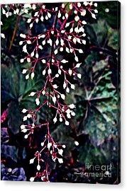 Natural Lace Acrylic Print by Sarah Loft