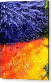 Natural Painter Acrylic Print