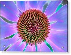 Natural Pattern Acrylic Print