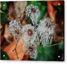 Acrylic Print featuring the photograph Natural Plant Designs by Robert Pilkington
