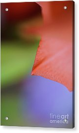 Natural Primary Colors Acrylic Print