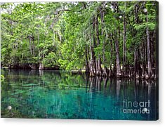 Natural Spring Acrylic Print by Debbie Green