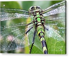 Natural Stained Glass Acrylic Print by Carol Groenen