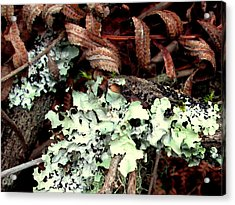 Natural Still Life #1 Acrylic Print