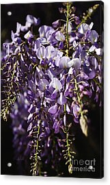 Natural Wisteria Bouquet Acrylic Print