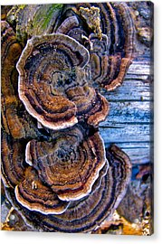 Natural World Fans Acrylic Print