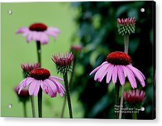 Nature At Its Best Acrylic Print