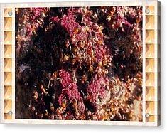 Nature Beautiful  Insect World  Ant Hill Hole Colony  Acrylic Print by Navin Joshi