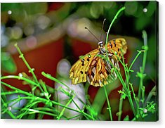 Nature - Butterfly And Plants Acrylic Print