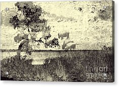 Nature Collage Acrylic Print by Mickey Harkins