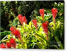 Acrylic Print featuring the photograph Nature Exotic by The Art of Alice Terrill