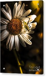 Nature Fine Art Summer Flower With Insect Acrylic Print