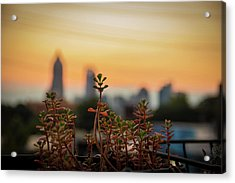 Nature In The City Acrylic Print