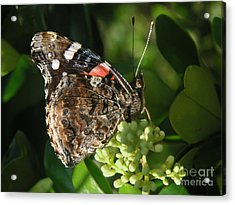 Nature In The Wild - A Rest For The Weary Acrylic Print by Lucyna A M Green