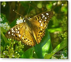Nature In The Wild - Kaleidoscope Of Color Acrylic Print by Lucyna A M Green