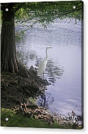 Nature In The Wild - Musings By A Lake Acrylic Print by Lucyna A M Green