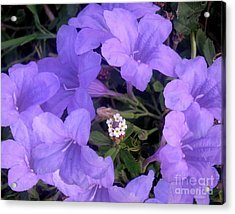 Nature In The Wild - Ring Around The Posy Acrylic Print by Lucyna A M Green