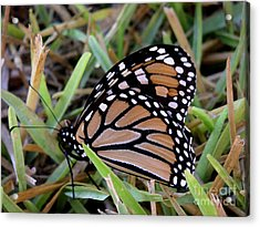 Nature In The Wild - Traveling Light Acrylic Print by Lucyna A M Green