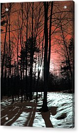Nature Of Wood Acrylic Print by Mark Ashkenazi