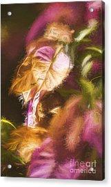 Nature Pastel Artwork Acrylic Print by Jorgo Photography - Wall Art Gallery