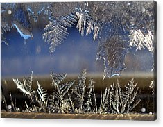 Nature' S Art Work Acrylic Print by Irma BACKELANT GALLERIES
