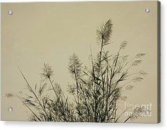 Nature Scenery In Lijiang China Acrylic Print by Julia Hiebaum