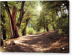 Acrylic Print featuring the photograph Nature Trail by Alison Frank