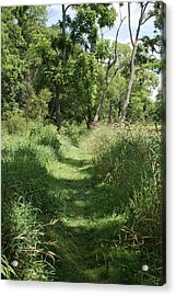 Nature Trail Acrylic Print by Heather Green