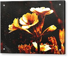 Nature Uncovered  Acrylic Print by Andrew Hunter