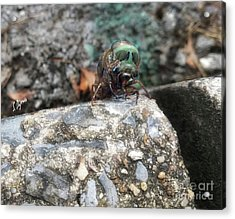 Nature's Aliens  Acrylic Print by Steven Digman