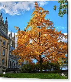 Acrylic Print featuring the photograph Natures Architecture by Mitch Cat