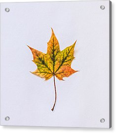 Natures Art Acrylic Print by Kate Morton