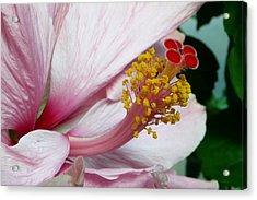 Natures Art Acrylic Print