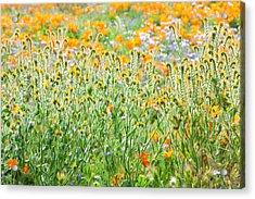 Nature's Artwork - California Wildflowers Acrylic Print by Ram Vasudev