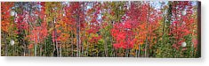 Acrylic Print featuring the photograph Natures Autumn Palette by David Patterson
