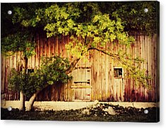 Natures Awning Acrylic Print by Julie Hamilton