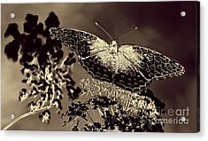 Natures Beauty Acrylic Print by Arnie Goldstein