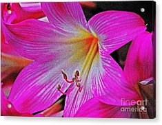 Natures Beauty Acrylic Print