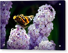 Nature's Beauty Acrylic Print