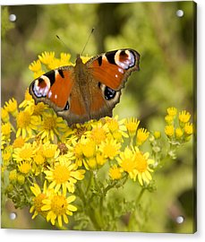 Acrylic Print featuring the photograph Nature's Beauty by Ian Middleton