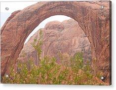 Nature's Bridge Acrylic Print by Amy Holmes