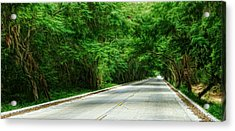 Nature's Canopy Acrylic Print