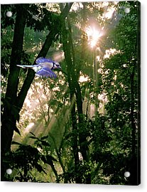Acrylic Print featuring the photograph Nature's Cathedral by Marie Hicks