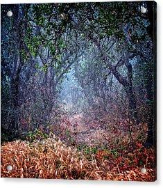 Nature's Chaos, Arroyo Grande, California Acrylic Print