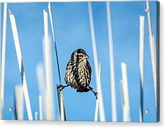 Nature's Circus Acrylic Print