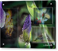 Natures Collage Acrylic Print